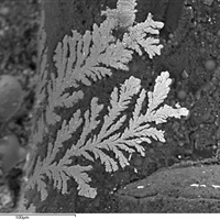 Microscopic Metallic Ferns