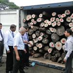 Rosewood logs from Madagascar seized by authorities in Sri Lanka (image courtesy of mongabay.com)